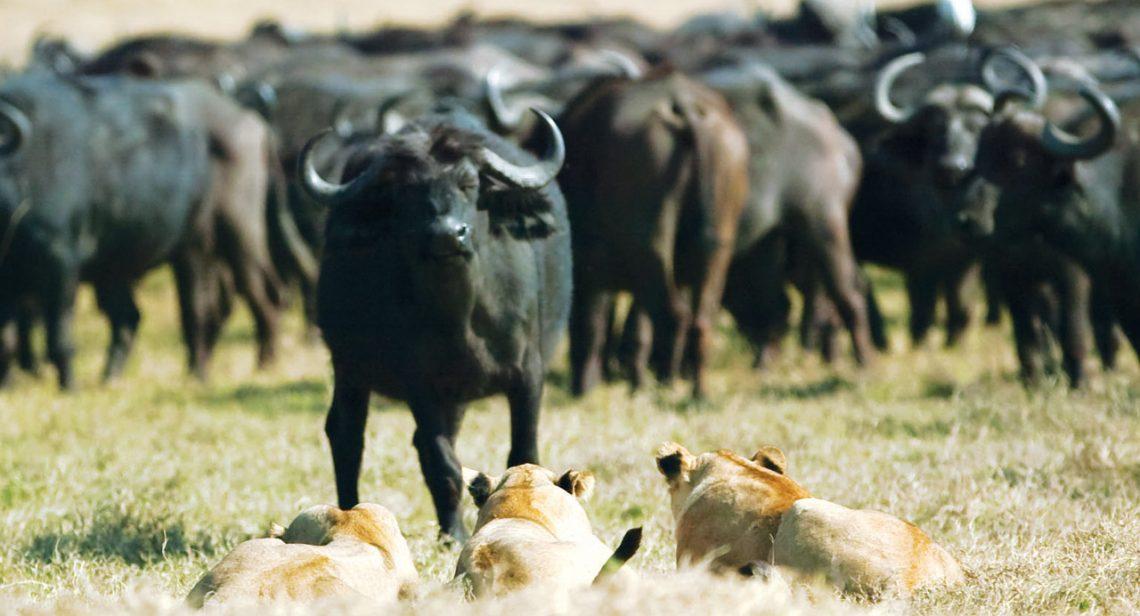 Predators, fight or flight, tactics, survival instinct, running away